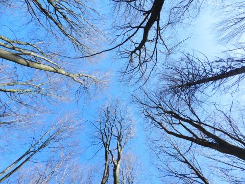 trees_nature_sky 2